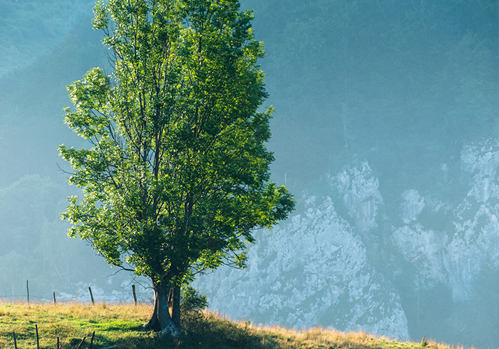 image of a tree with mountains in the background